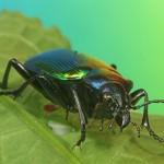 Käferausstellung
